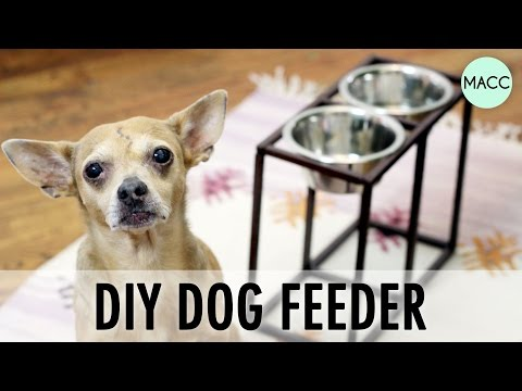 Bad Dogs - Shee Deeder