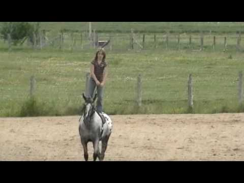 Appaloosa Voltige