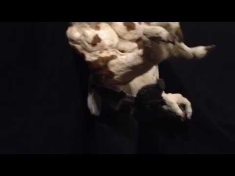 super sculpey  wip