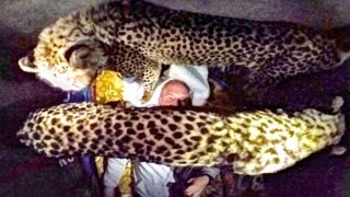 Night 2: Sleeping Inside A Cheetah Enclosure With Two Adult Big Cats - Cat Bites Cuddles Loves Purrs