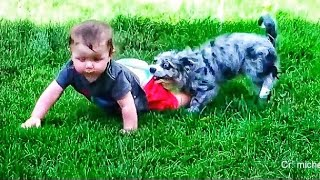 dog and Babies Playing Together Compilation funny video