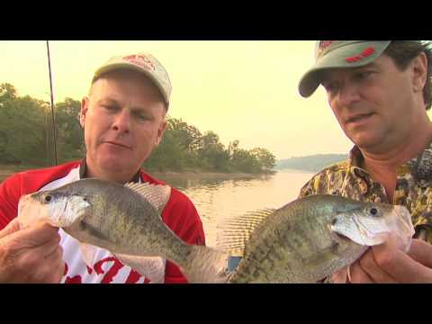 Green River Lake crappie fishing... plus a surprise catch!