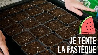 VLOG POTAGER 🌱 Semis, bouture et conserves | Friendly Beauty