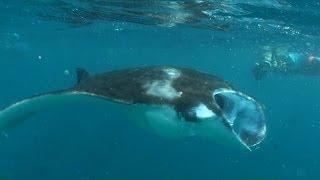 Veligandu, snorkelling with Manta rays