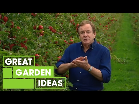 Better Homes and Gardens - How to grow an apple tree