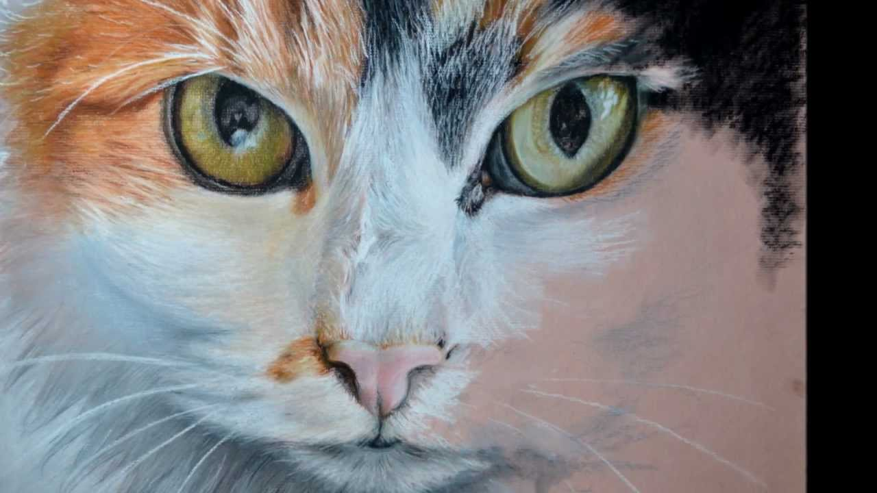 pansy cat paintingdrawing in pastel step by step youtube