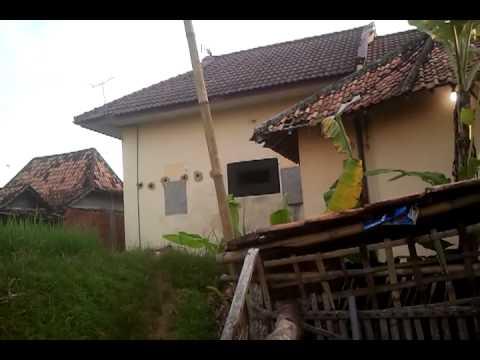 Burung Walet Bermain video