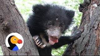 Baby Bear Who Lost His Mom Gets A Second Chance | The Dodo
