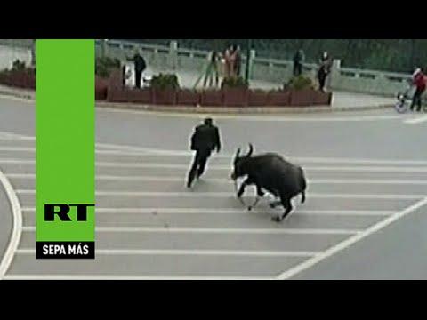 Un toro enfurecido ataca a decenas de personas en China