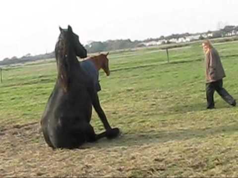 Les chevaux en pleine action