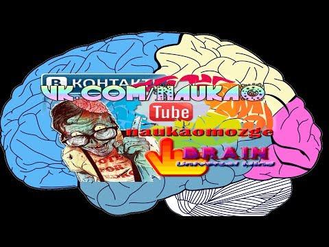 Уникальные возможности мозга Наука  Эксперименты Опыты Научные открытия о мозге 1