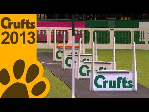 Flyball Quarter Finals - Short Highlights - Crufts 2013