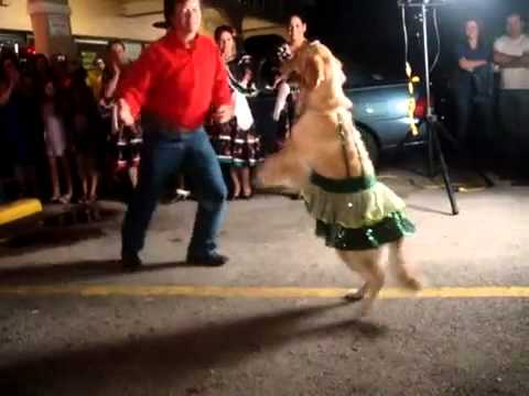 Mexican Dancing Dog