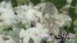 Download Lagu Kulucu Malati-Kacapi Suling Gratis STAFABAND