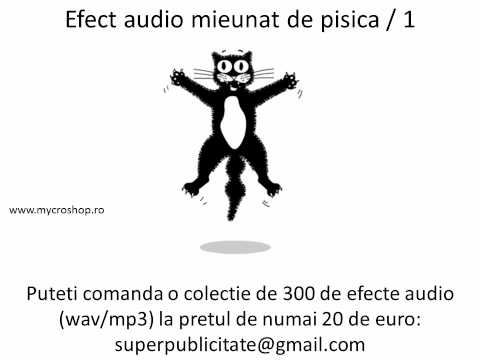 Efect Audio Mieunat De Pisica 1. Cat Sound Effects.1 video