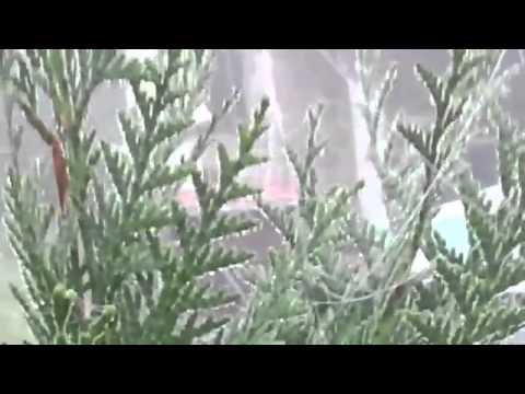 Polimeros de chemtrails invasión masiva. España