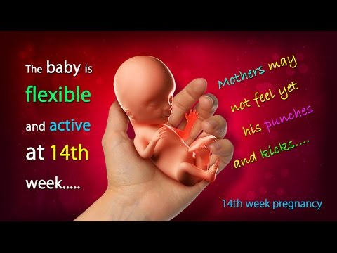 14 weeks pregnant how big is your baby this week youtube for What should a 14 month old be doing