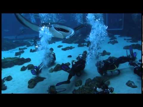 Georgia Aquarium Dive 2/8/14
