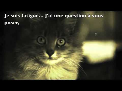Chat trop mignon et drole mais attention youtube - Photo chat marrant ...