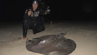 Huge Stingray from the beach