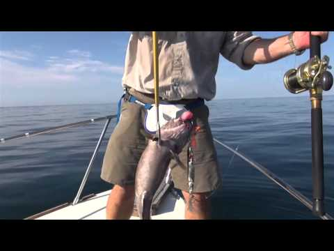 Rehabilitative underwater photography shimoda for Deep sea fishing in maine