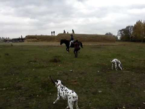 Horseback riding with dalmatians, Ukraine, Autumn 2009
