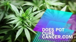Does Pot Cure Cancer?