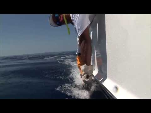 Blue Marlin Fishing, Costa Rica with Capt. Dave Noling and Angler Tami Noling