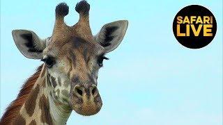 safariLIVE - Sunrise Safari - January 17, 2019