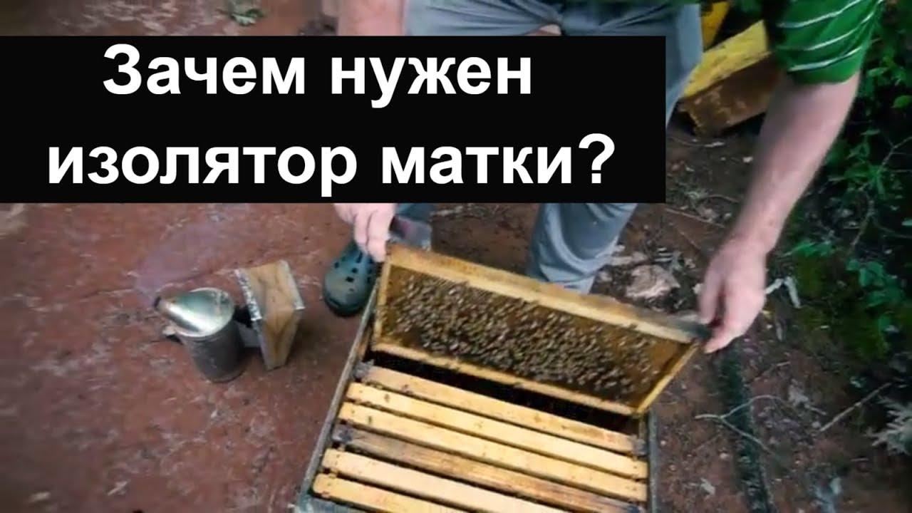 Как сделать отвод пчёл