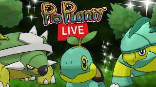 Turtwig Community Day Live Pokemon Go Shiny Hunt