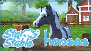 Raising Our New Foal!! • Star Stable Horses App!