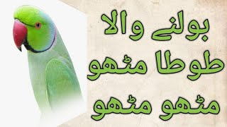 Parrot speaking  by Naveed part 5