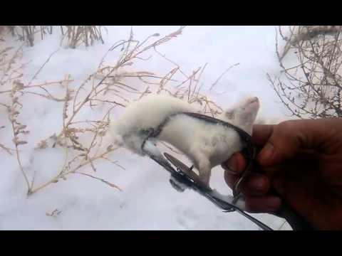 Как ловить зайцев на капкан (как сделать ловушку для зайцев своими руками)