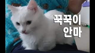 집사에게 꾹꾹이를 하는 귀여운고양이동영상