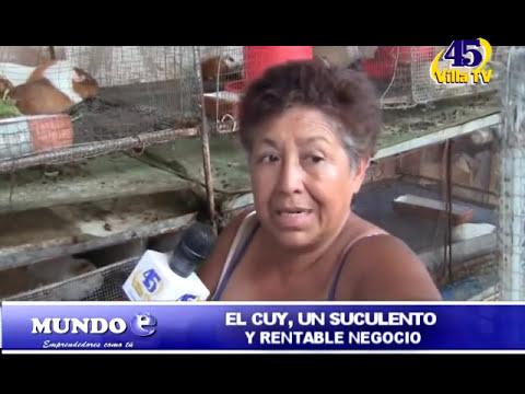 MUNDO E - EL CUY UN  NEGOCIO RENTABLE.