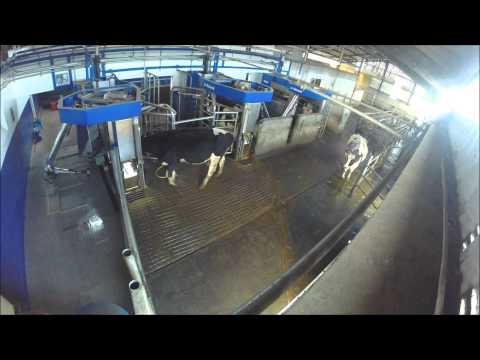 Golden Hill Farm Delaval VMS Robotic Milking and ABC Grazing