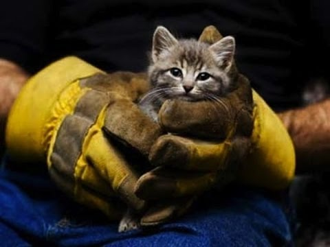 Мир не без добрых людей. Спасение животных. Круговорот добра в природе.