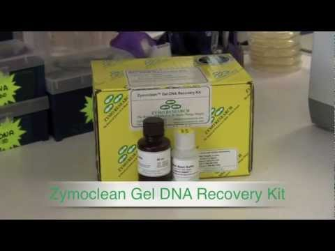 Zymoclean Gel DNA Recovery Kit- 80% & Higher DNA Recovery