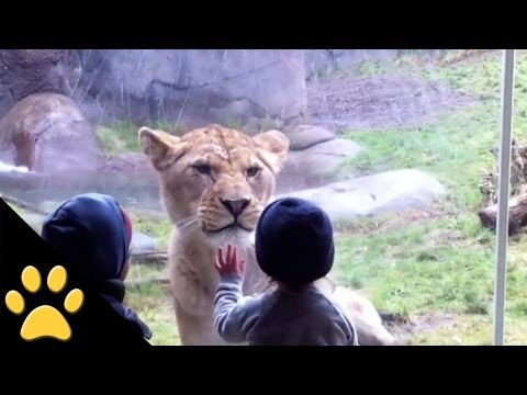 Kids At The Zoo: Compilation video