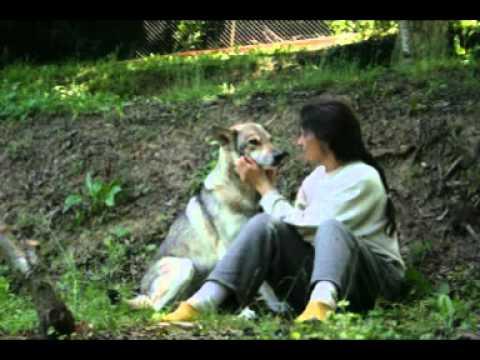 Similitudini tra Cani e Lupi - Il Lupo che è dentro di me - Dedicato ai miei Saarloos