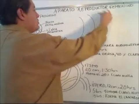 APARATO REPRODUCTOR FEMENINO DEL AVE (AUXILIAR VETERINARIO CCSA)
