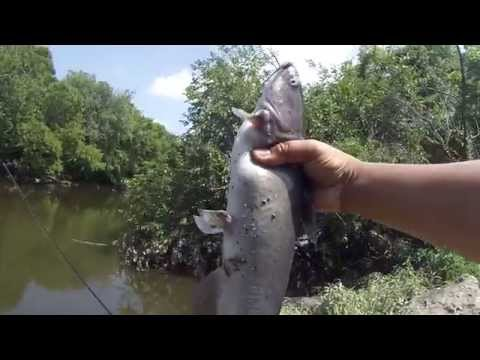 Brief Carp Tutorial: Fishing for Carp + Catfish at the Frankford Creek (Port Richmond, PA)