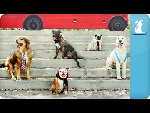 image vidéo Les One Direction en version canine