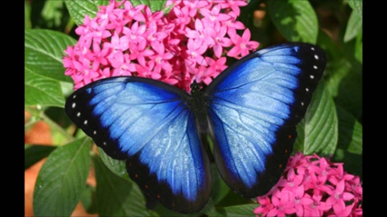Las flores mas hermosas youtube - Fotos de flores bonitas ...