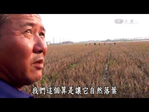 台綜-農夫與他的田-20160321 老鷹紅豆的故事