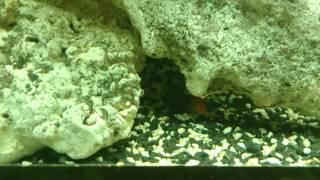 Large aquarium at the reception of Harvey Norman