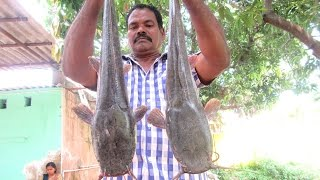Cooking Two Big Cat Fish in My Village | Traditional Way To Cook |  VILLAGE FOOD