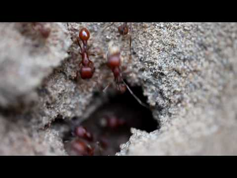 MP-E macro video sample of ants entering and exiting their nest.  This was shot at 1x handheld.  I u