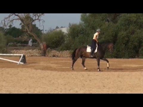 junges Pferd Springstunde Beispiel